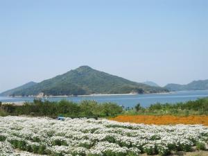 浦島伝説の地で、花らんまん♪
