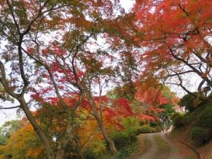 金刀比羅宮裏参道の紅葉が見頃♪  ※11月30日、12月7日 空室あります。