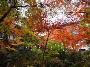 宝光寺の紅葉 ※12月7日(土)空室あります。