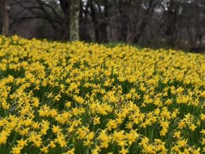 まんのう公園で春の便り ※4月4日(土)は平日料金