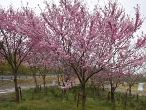 国営讃岐まんのう公園で春のお花めぐり♪
