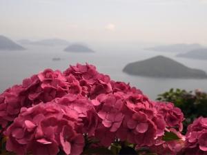 紫陽花の名所 「紫雲出山」に行ってきました♪