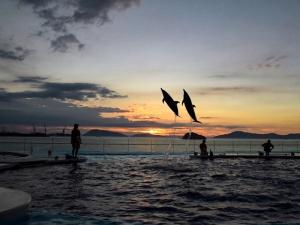 【四国水族館】海豚に会いに行ってきました♪