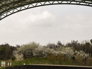 【国営讃岐まんのう公園】桜のお花見を堪能♪