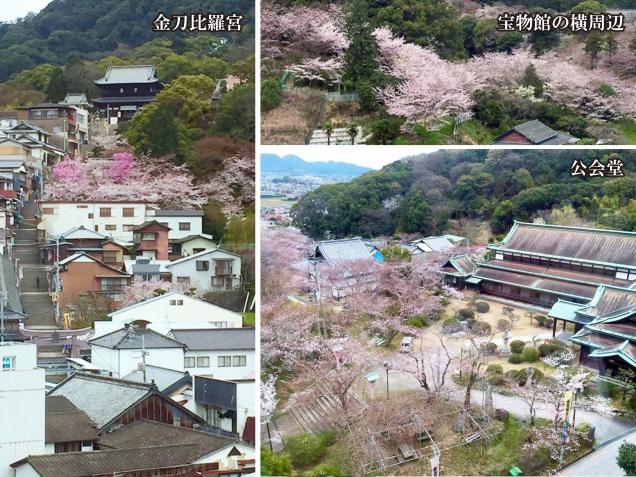 ☆桜の抄の桜ちゃんを御紹介しますpart2☆
