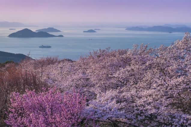 2019年 桜スポット②~紫雲出山~