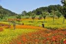 15品種45万株のコスモスが園内を彩ります☆♪
