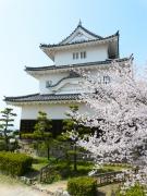 丸亀城の桜まつり(亀山公園)は3月下旬~4月初旬が見頃です♪