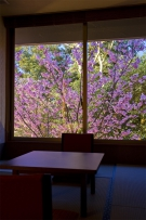 桜が見える特等席♪