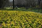 少し早い春だより*・゜゚・*:.。国営讃岐まんのう公園