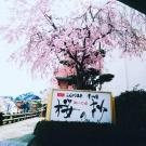 桜の抄という看板にて