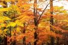 落ち葉の絨毯みたいに★紅葉
