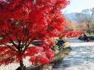 香川用水記念公園に色づく紅葉たち
