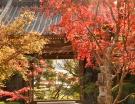 【三豊市の紅葉の名所】宝光寺