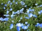 「善通寺五岳の里 市民集いの丘公園」で春のお花便り  ※2月29日空室あります