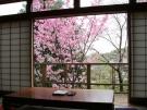 湯上がり処や客室露天風呂からお花見♪ ※4月4日(土曜)はお得な平日料金