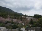新しくオープンする温泉露天風呂付き客室から桜の眺望♪