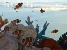 【ソラキン】宇多津町で宙(そら)を泳ぐ3333尾の金魚に出会えます♪