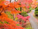 香川県の紅葉スポット(金刀比羅宮裏参道)