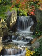 香川県の紅葉スポット(2) 香川用水記念公園
