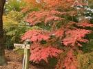 香川県の紅葉スポット「満濃池森林公園」