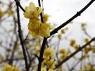 【国営讃岐まんのう公園】春の訪れを感じさせてくれます♪