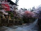 【金刀比羅宮】香川の桜スポット★桜のトンネルで華やかに参拝をお楽しみいただけます。