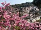 桜が「ぶわっ」♡♡