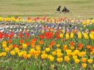 【国営讃岐まんのう公園】春らんまんフェスタ♪春のフラワーリレー満喫♪