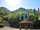【不動の滝カントリーパーク】新緑がまぶしい不動の滝とツツジと鯉のぼり♪