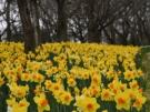 春天的腳步已接近,來趟溫泉之旅如何?